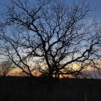 Last Sunset_C315145 by Richard Thomas