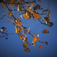 Autumn Winter_1025203 by Richard Thomas