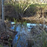Edgewater Creek_1025208 by Richard Thomas