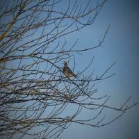 Wild Pigeon_1025260 by Richard Thomas