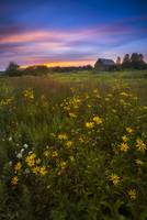 Wildflowers in Ohio by Cody York_Q7A0054