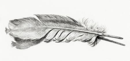 Feather by Jean Bernard (1775-1883)