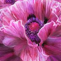 pink poppy Art Prints & Posters by Tracy Hall