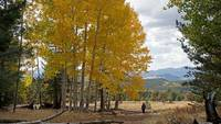 Fall Walk in Aspens