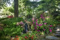 Blooming Rhododendrons in Japanese Garden