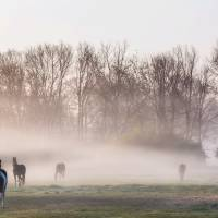 Morning on the Pasture by Jim Crotty Art Prints & Posters by Jim Crotty