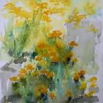 Abstract Helichrysum Watercolors Medicinal Plants Prints & Posters