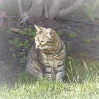 Spring Cat_3156083 by Richard Thomas