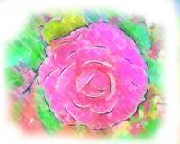 Camellia Pastel Pink Bloom by Kirt Tisdale