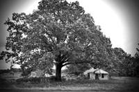 Texas Forgotten - Abandoned Farmhouse Under Oak I