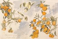 Edward Lear~Fruit trees, 3 April 1863