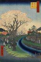 Hiroshige~Blossoms on the Tama River Embankment, N