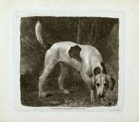 George Stubbs~Dog (A Foxhound on the Scent)