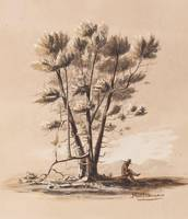 Heinrich Balduin Möllhausen~Alligator Bark Juniper