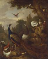 Jakob Bogdani~Peacock, peahen, parrots, canary, an