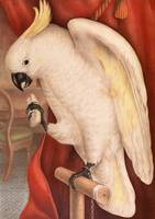 James Whitley Sayer~Great Sulphur-Crested Cockatoo