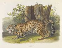 John James Audubon~Felis onca, Linn. The Jaguar. F