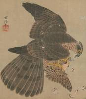Kanō Tsunenobu~十鷹書画冊Album of Hawks and Calligraphy