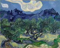 Vincent van Gogh~The Olive Trees