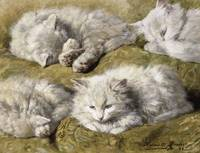 Henriette Ronner-Knip~Studies of a Long-haired Whi