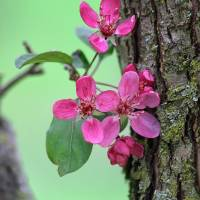 Blooms and Bark by Karen Adams