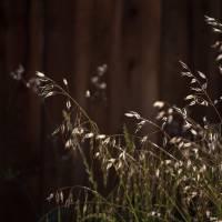 dry grass in my backyard Art Prints & Posters by Mun Sing Loh