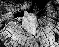 Shell on Drift II - BW