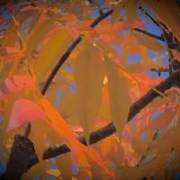Autumn Gold by Richard Thomas