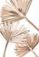 3 Sun-Dried Palm Leaves