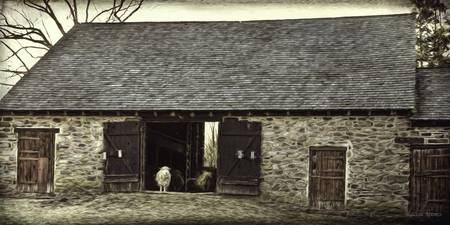 Stone Barn wih Sheep