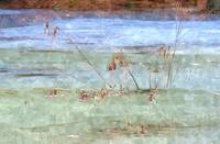 Swamp Grass in Blue and Green Ice No1 (WC)