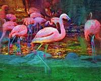 Pink Flamingos by Kirt Tisdale