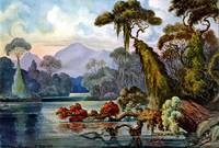 Ernst Haeckel Ceylon Jungle River