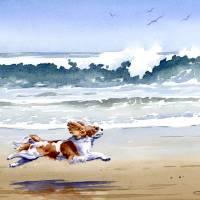 Cavalier King Charles Beach Running Art Prints & Posters by David Rogers