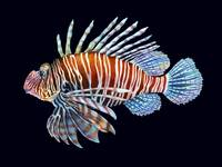 Lionfish in Black