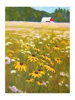 Farm-field-wildflowers-IK