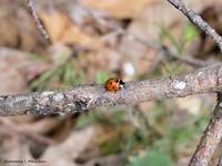 Luck is a Lady Bug