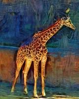 LA Zoo Giraffe by Kirt Tisdale