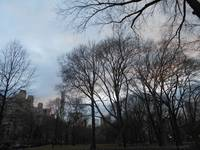 Central Park - F