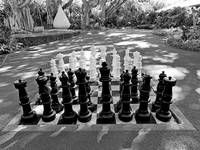 Tropical Chess Study 3