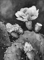 Desert Bloom in Black and White