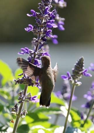 Hummingbird Hug
