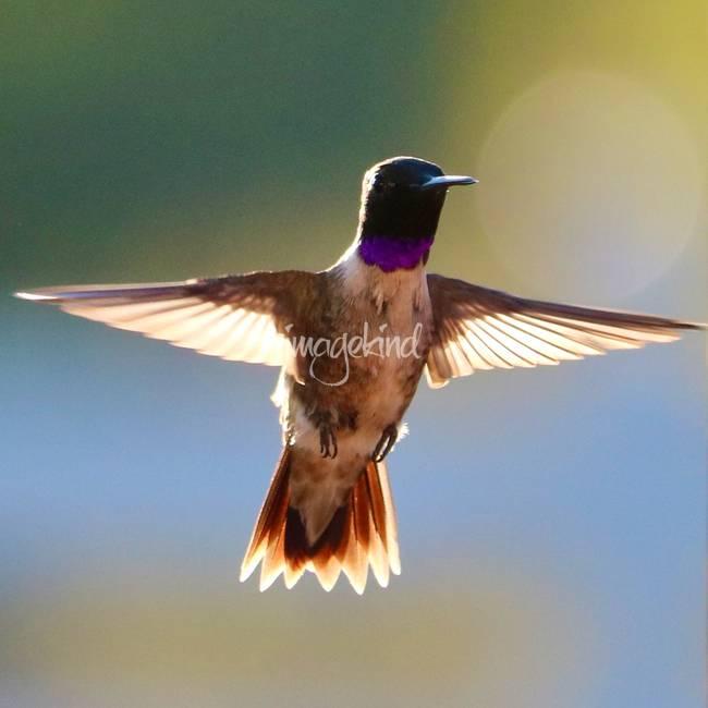 Super Hummingbird