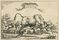 Bull attacked by three hunting dogs, Marcus de Bye