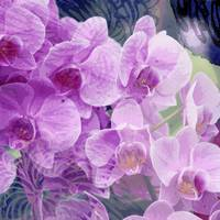 Purple Orchids Floral Digital Art