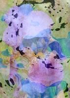 Iris Inspiration Abstract by Carol Groenen