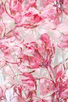 Pink and White Botanical Vertical by Carol Groenen