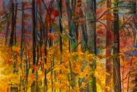Rainbow_Colors_in_the_Fall_Forest