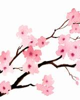 Cherry Blossoms Triptic 1