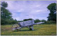 Old Wheelbarrow in Maitland